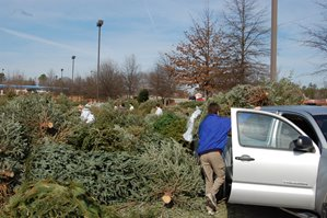 Recycle Christmas trees, bulbs, cooking liquids on Jan. 6