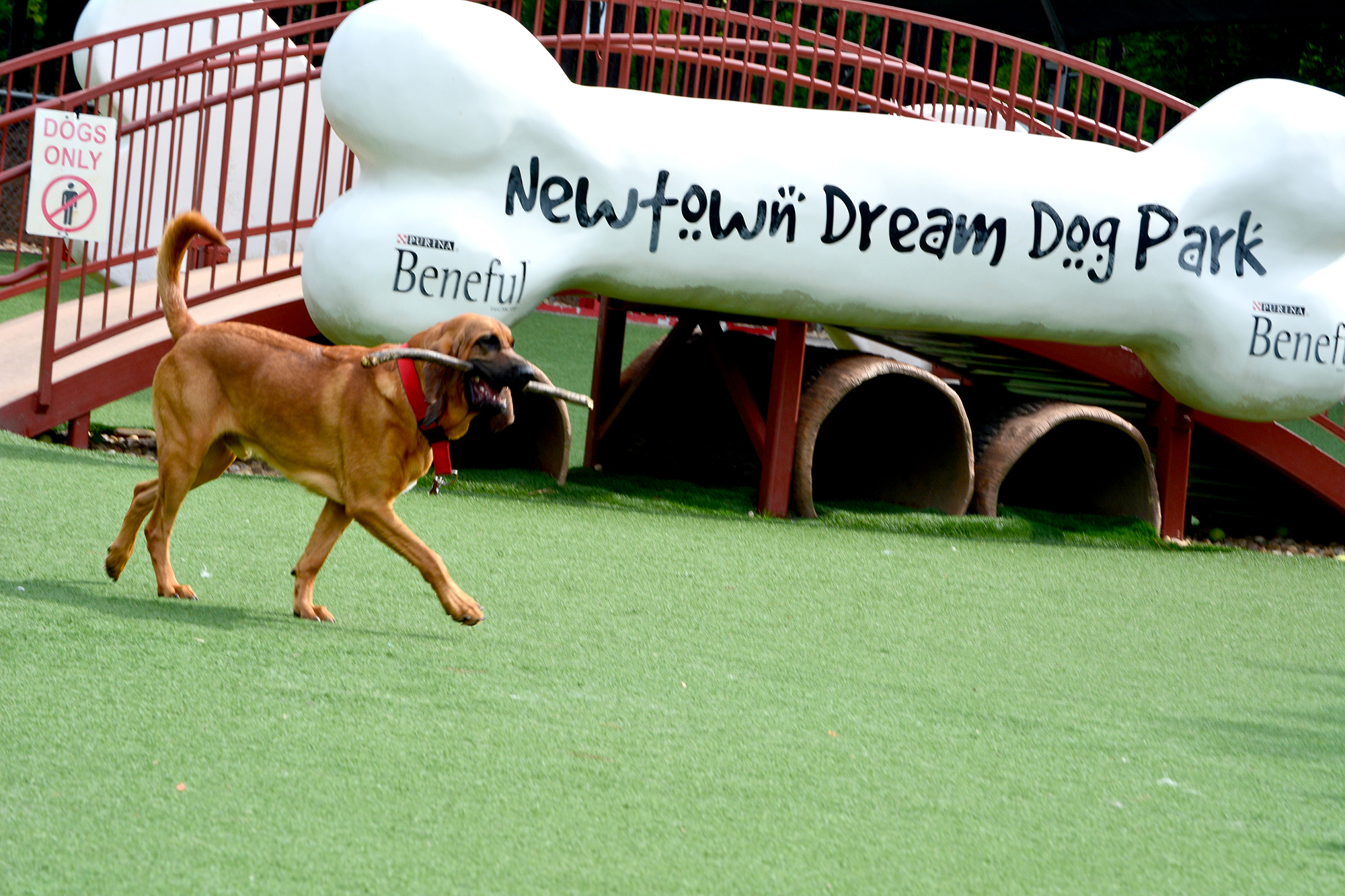 Newtown Dream Dog Park named Best Dog Park